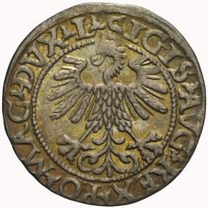Zygmunt II August, Półgrosz 1560, Wilno, LITV