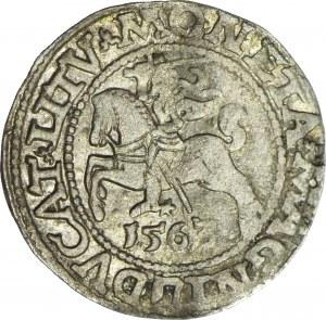 Zygmunt II August, Półgrosz 1563, Wilno, LI/LITV