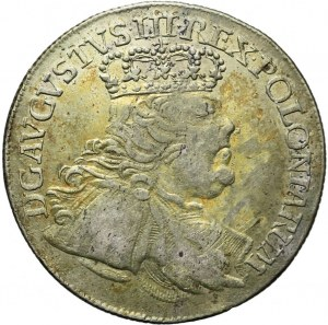 August III Sas, Ort 1754, popiersie buldogowate