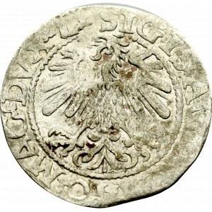 Sigismund II Augustus, Halfgroat 1559, Vilnius