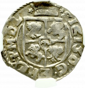Zygmunt III Waza, Półtorak 1616, Kraków - NGC AU58