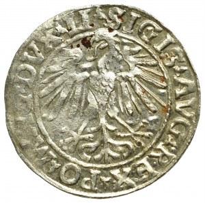 Zygmunt II August, Półgrosz 1548, Wilno - LI/LITVA