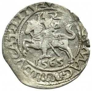 Zygmunt II August, Półgrosz 1565, Wilno - L/LITV