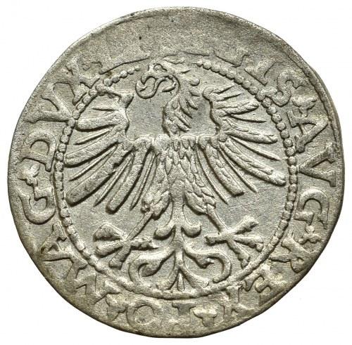 Zygmunt II August, Półgrosz 1563, Wilno - DVCT