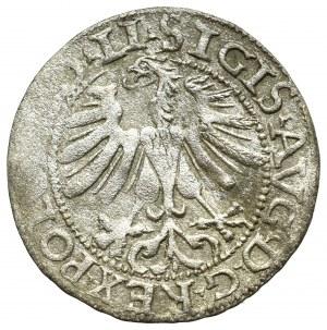 Zygmunt II August, Półgrosz 1565, Wilno - LI/LITV