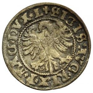 Zygmunt II August, Półgrosz 1546, Wilno - stary typ orła