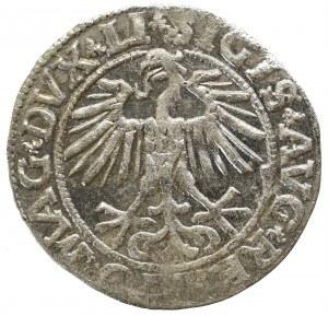 Zygmunt II August, Półgrosz 1551, Wilno - LI/LITVA