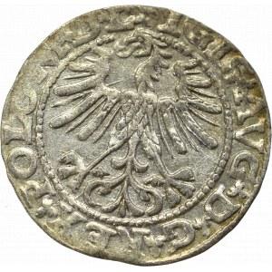 Zygmunt II August, Półgrosz 1563, Wilno - L/LITVA