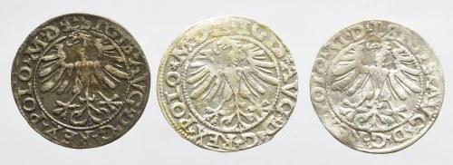 Zygmunt II August, Zestaw półgroszy