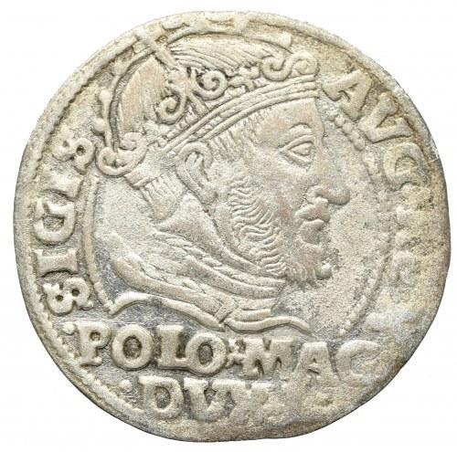 Sigismund II Augustus, Grossus 1548, Vilnius