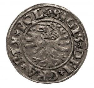Polska, Zygmunt I Stary 1506–1548, szeląg 1531, Gdańsk.