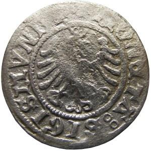 Zygmunt I Stary, półgrosz 1507, leżąca 7, Kraków