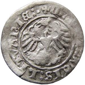 Zygmunt I Stary, półgrosz 1513, Wilno, dwukropek/trzykropek RRR