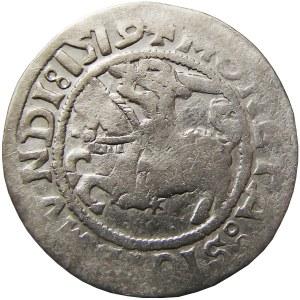 Zygmunt I Stary, półgrosz 1519, Wilno, Bardzo rzadka odmiana (RRRR)