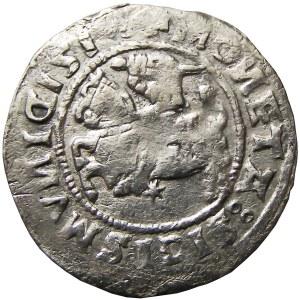 Zygmunt I Stary, półgrosz 1519, Wilno, SIGISMVNID (RRR)