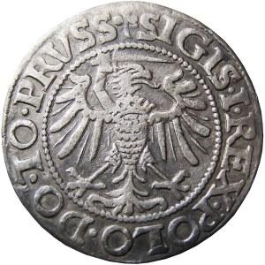 Zygmunt I Stary, grosz 1539, Elbląg, bardzo ładny (42)