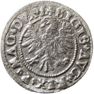 Zygmunt II August, półgrosz 1547, Wilno (R3)