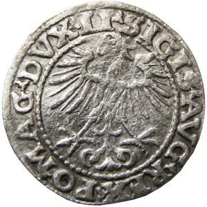 Zygmunt II August, półgrosz 1552, Wilno (51)