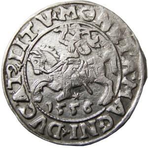 Zygmunt II August, półgrosz 1556, Wilno, NIENOTOWANY