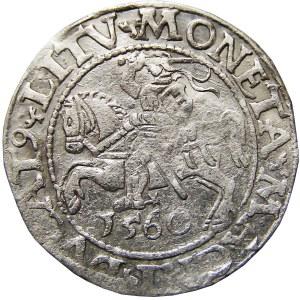 Zygmunt II August, półgrosz 1560, Wilno
