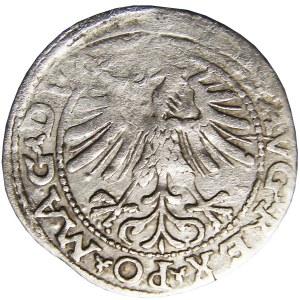 Zygmunt II August, półgrosz 1563, Wilno, LIT - rzadki