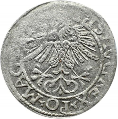 Zygmunt II August, półgrosz 1561, Wilno