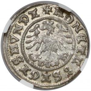 Zygmunt I Stary, Półgrosz Kraków 1509 - piękny