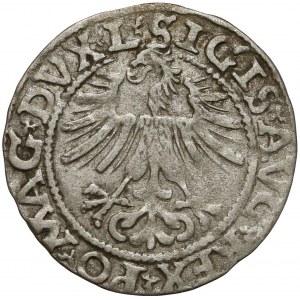 Zygmunt II August, Półgrosz Wilno 1562 - Topór U GÓRY - b.rzadki