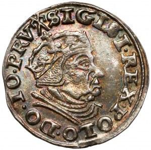 Zygmunt I Stary, Trojak Gdańsk 1540 - b. ładny