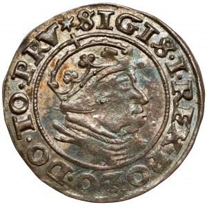 Zygmunt I Stary, Grosz Gdańsk 1540 - PRV - b.ładny