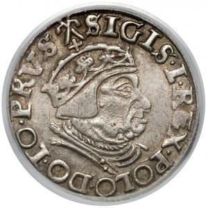 Zygmunt I Stary, Trojak Gdańsk 1539 - rozetki