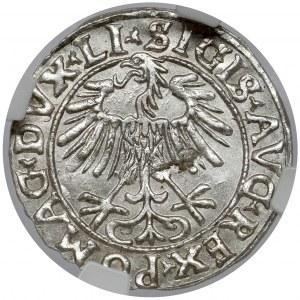 Zygmunt II August, Półgrosz Wilno 1556 - piękny