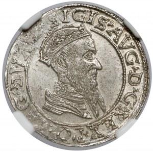 Zygmunt II August, Czworak Wilno 1567 - piękny