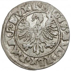Zygmunt II August, Półgrosz Wilno 1546 - owalna tarcza