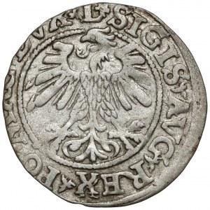 Zygmunt II August, Półgrosz Wilno 1560 - ROZETKI na Aw. i Rw.