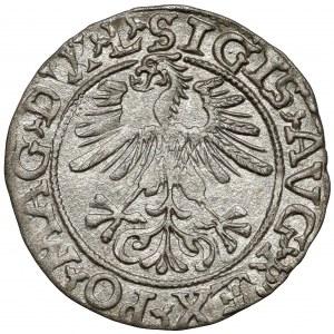 Zygmunt II August, Półgrosz Wilno 1561