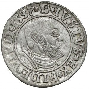 Prusy, Albrecht Hohenzollern, Grosz Królewiec 1537