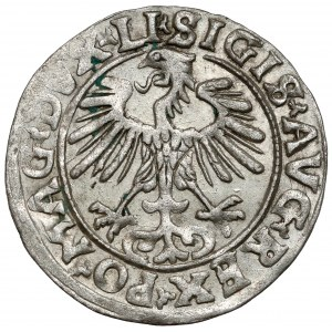 Zygmunt II August, Półgrosz Wilno 1556