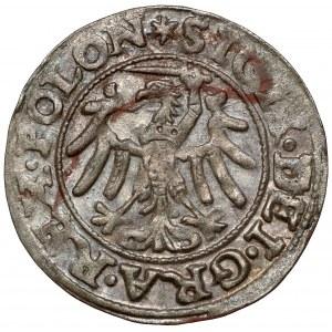 Zygmunt I Stary, Szeląg Gdańsk 1546 - piękny - ex. Kałkowski