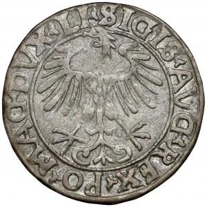 Zygmunt II August, Półgrosz Wilno 1556 - ex. Kałkowski