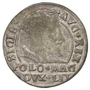 Zygmunt II August, Grosz na stopę polską 1546 - data w otoku - rzadki