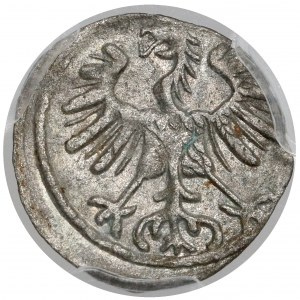 Zygmunt II August, Denar Wilno 1555