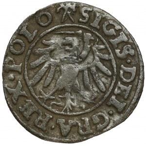Zygmunt I Stary, Szeląg Gdańsk 1538