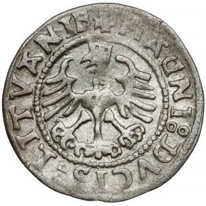 Zygmunt I Stary, Półgrosz Wilno 1528 - błąd MONEA - rzadki