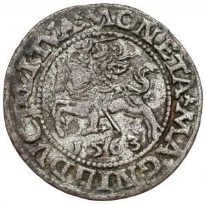 Zygmunt II August, Półgrosz Wilno 1563 - błąd DVCT - rzadki
