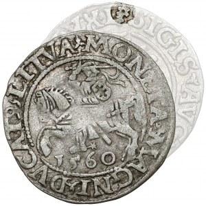 Zygmunt II August, Półgrosz Wilno 1560 - ROZETA - LITVA