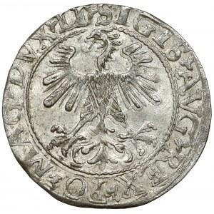 Zygmunt II August, Półgrosz Wilno 1560 - LITVA