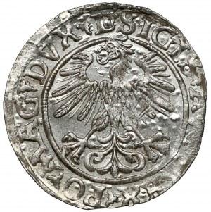 Zygmunt II August, Półgrosz Wilno 1560 - LITV