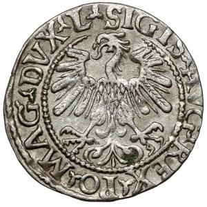 Zygmunt II August, Półgrosz Wilno 1559 - L/LITVA