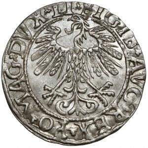 Zygmunt II August, Półgrosz Wilno 1558